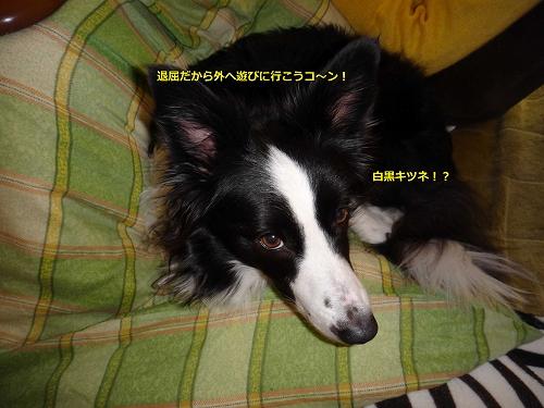 2014_0111_135307AA.jpg