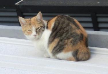 屋根の上の猫3