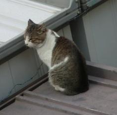 屋根の上の猫2