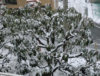 0208雪3