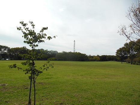 東村山中央公園1