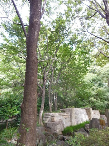 中央公園の木々