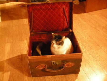 bag-cat28.jpg