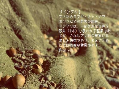 komazawap002.jpg