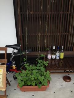 2012年 8月7日 お豆さん
