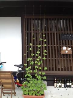2012年 8月15日 お豆さん 1