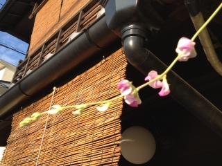 2012年 9月 23日 お豆さんの花