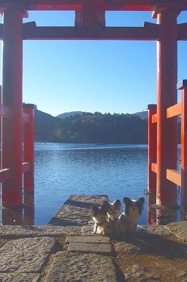 芦ノ湖逆光11.10
