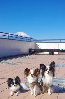 富士山ちょっと11.10