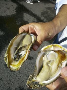 漁港牡蠣13.9.23