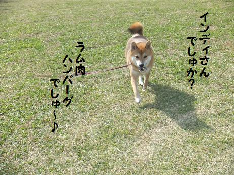 008c_20121104193343.jpg