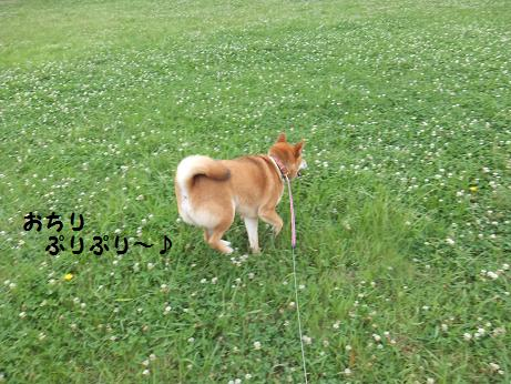 012c_20120625202724.jpg