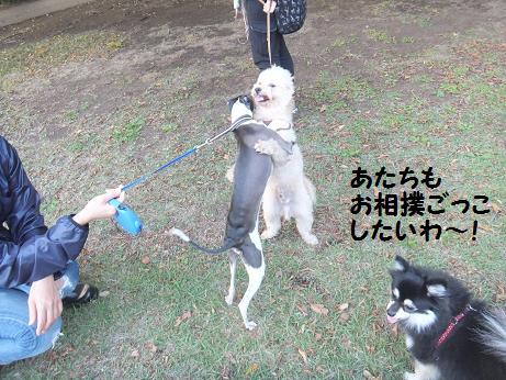 013c_20121024185729.jpg