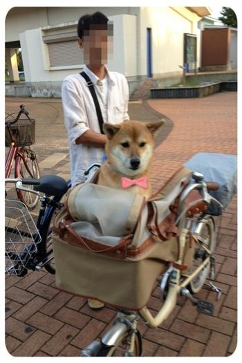 んのママ日記 犬乗せ用自転車 ...