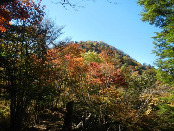 鷹ノ巣山② 015