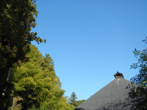 大悲願寺 118