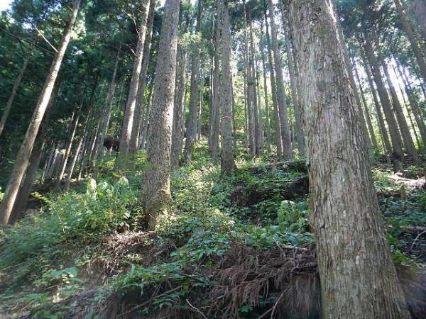 本仁田山2012.08.30 025