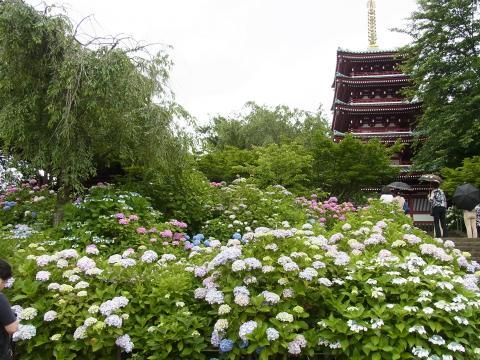 本土寺、其の2