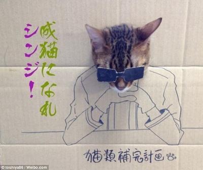 CardboardCat1210_02.jpg