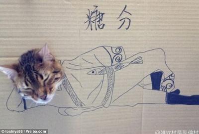 CardboardCat1210_03.jpg