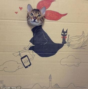 CardboardCat1210_06.jpg