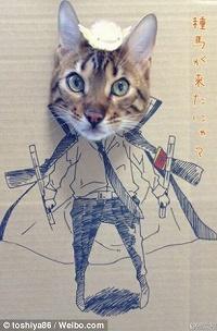 CardboardCat1210_07b.jpg