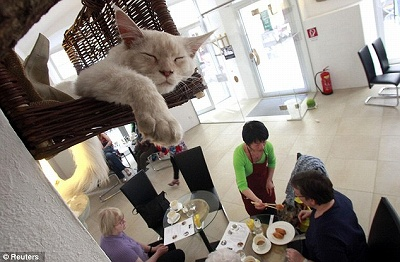 catcafe1205_02.jpg