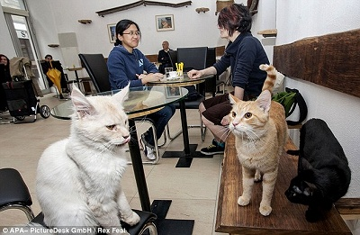 catcafe1205_05.jpg