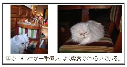 catcafe1205_10.jpg