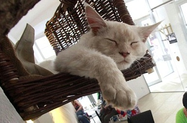 catcafe1205_20.jpg