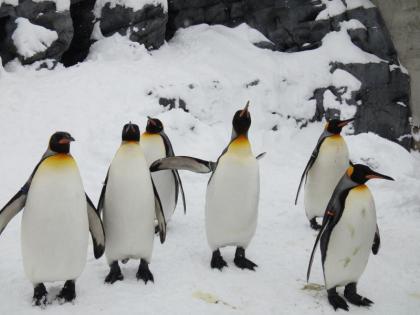 ペンギン(1)