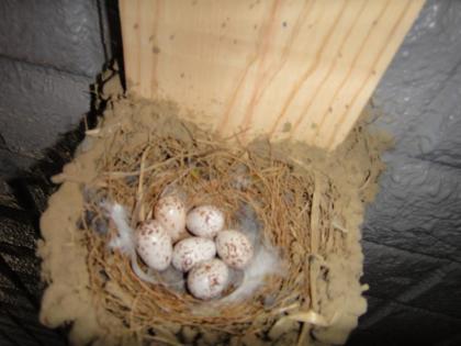 孵化前の卵