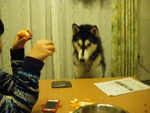 何食べてるの?1