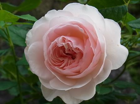 2日目の花