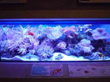 うおっち&もものブログ-サンゴ水槽全体2