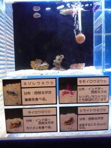うおっち&もものブログ-ウミウシ