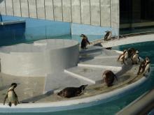 うおっち&もものブログ-ペンギン