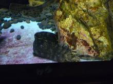 うおっち&もものブログ-変な顔の魚