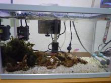 うおっち&ももの海水魚日記-臨時水槽3-19