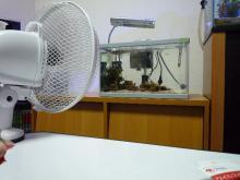 うおっち&ももの海水魚日記-臨時水槽-扇風機