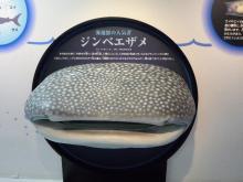 うおっち&ももの海水魚日記-ジンベイ