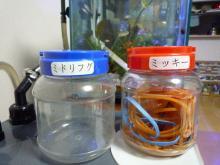 うおっち&ももの海水魚日記-ゲーセンのケース