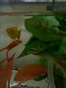 うおっち&ももの海水魚日記-PA0_0018