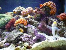 うおっち&ももの海水魚日記-60cm給餌1