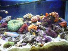 うおっち&ももの海水魚日記-60cm給餌2