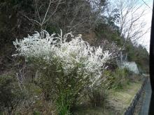うおっち&ももの海水魚日記-白い花(1)