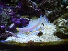 うおっち&ももの海水魚日記-09-04-07(2)