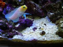 うおっち&ももの海水魚日記-09-04-07(3)