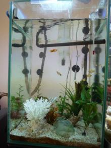 うおっち&ももの海水魚日記-汽水水槽1