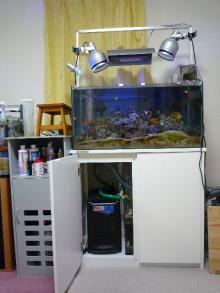 うおっち&ももの海水魚日記-90